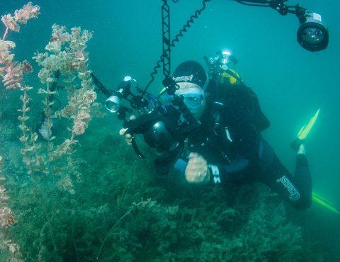Plongée dans le lac d'Annecy