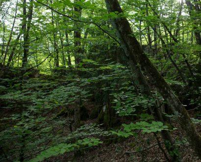 Forêt du Roc de Chère