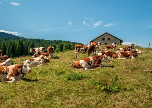 Un territoire rural