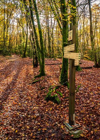 Randonnée en forêt en automne
